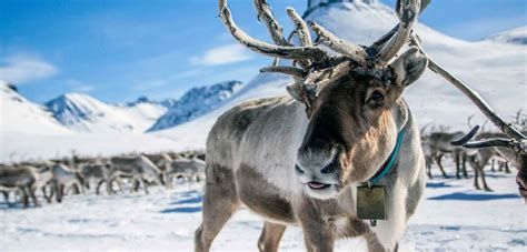 The Jotunheimen Mountains - Official travel guide to