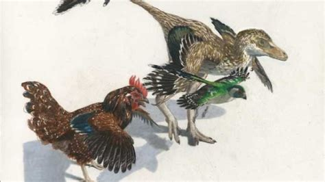 Birds Evolved From Dinosaurs Gradually, Capped With