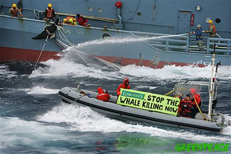 Protest fax and mail against Japanese whaling in the