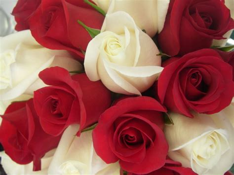 The Colour of the Rose Has a Hidden Meaning? | Roses2Go