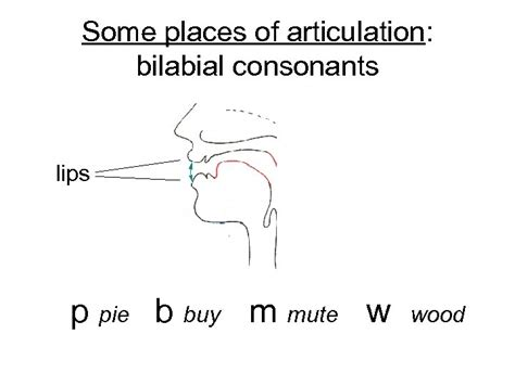 Practical Phonetics Week 2 Classifying sounds place and